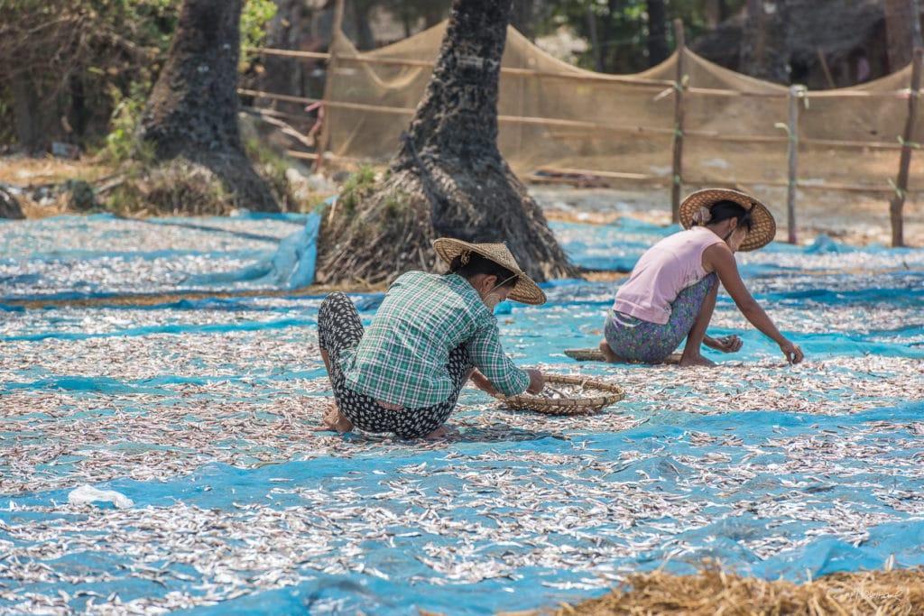 Birmanie16-3605